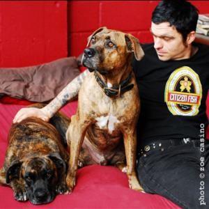 dog collar 0000000507