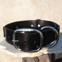 dog collar 0000000646