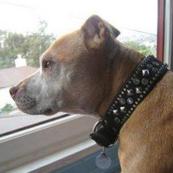 dog collar 0000000652