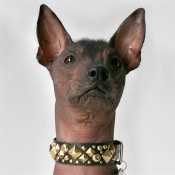 xdog_in_xdog_custom_leather_dog_collar