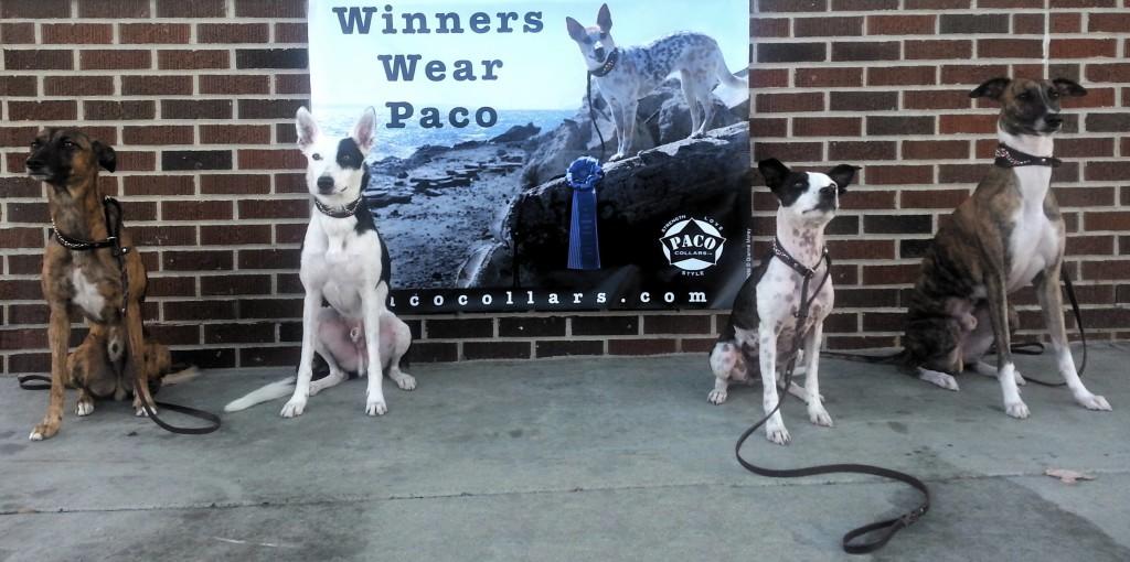 winners wear paco